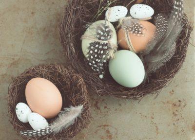 Olikfärgade ägg med fjädrar i fågelbon (dekorativ bild)